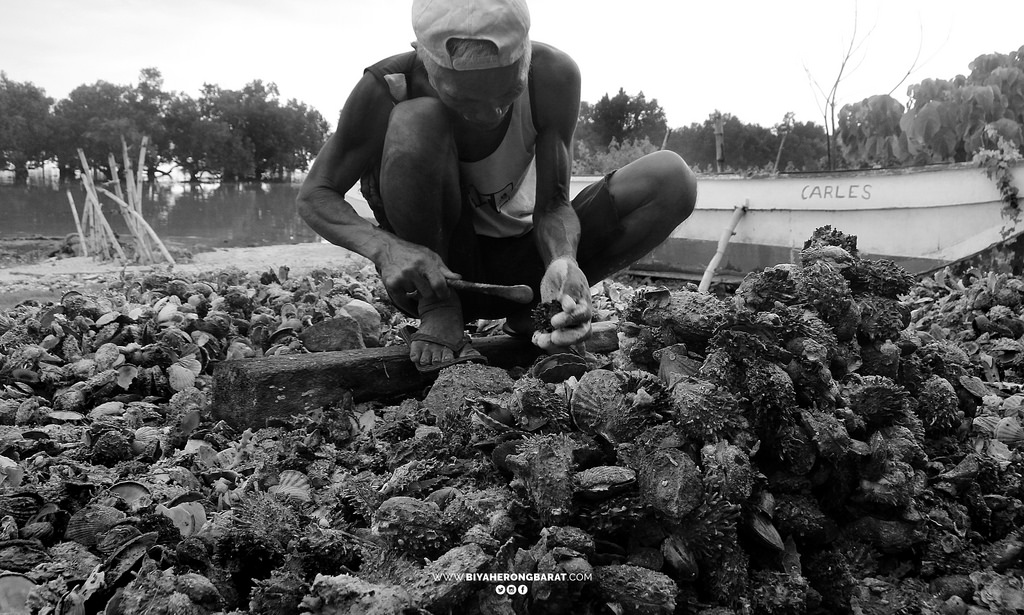 scallops in gigantes islands carles iloilo philippines visayas