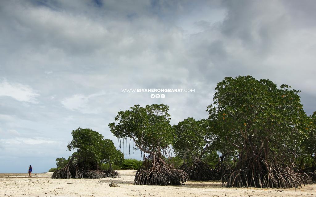 Alibijaban Island San Andres Quezon beach mangroves