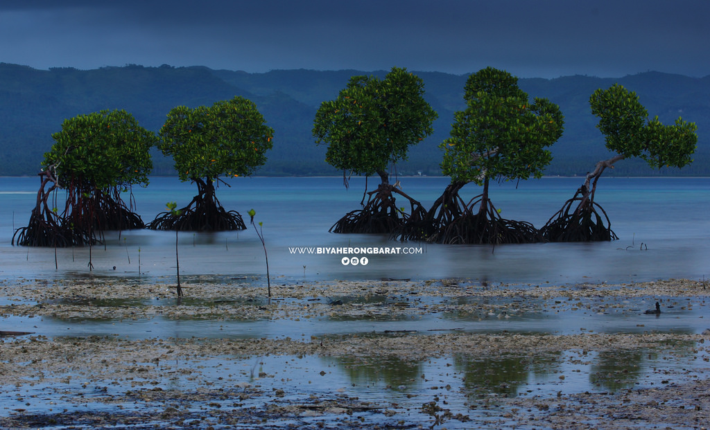 Alibijaban Island San Andres Quezon beach mangrove