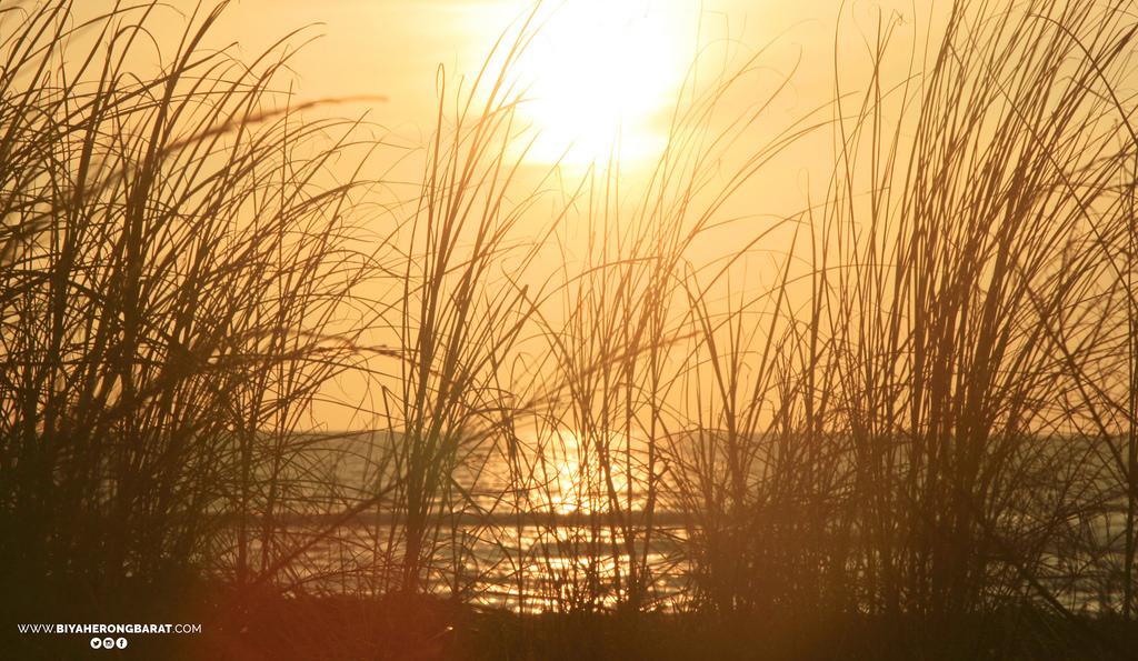 sunset liwliwa san felipe zambales grass philippines